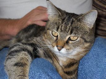 cat boarding bluefield wv