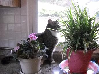 cat boarding in princeton wv